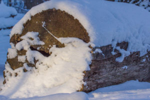 Washington grove january 2015 (3 of 1) copy